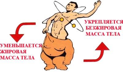 мышечная масса сжигает жир
